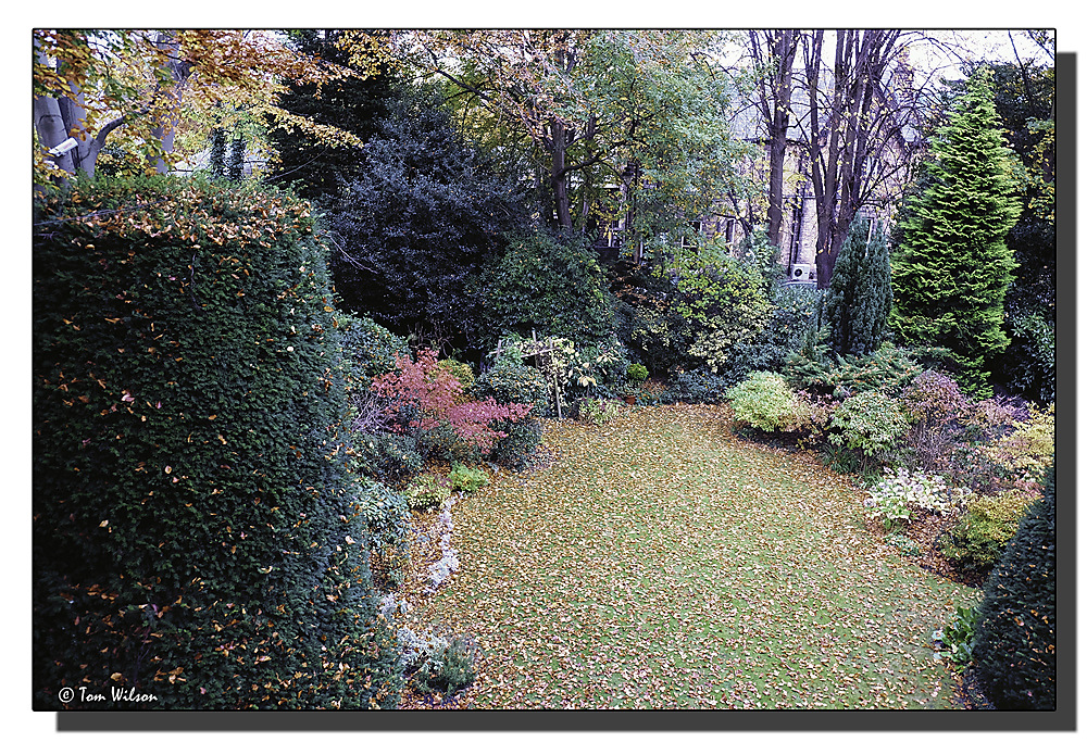 photoblog image Autumn garden