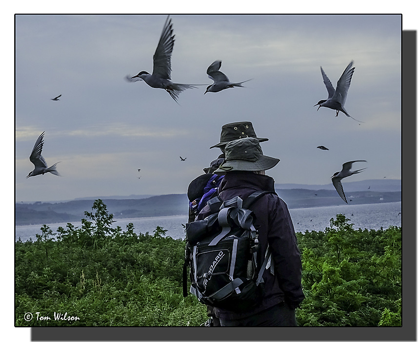 photoblog image Farne Islands - wear a hat!