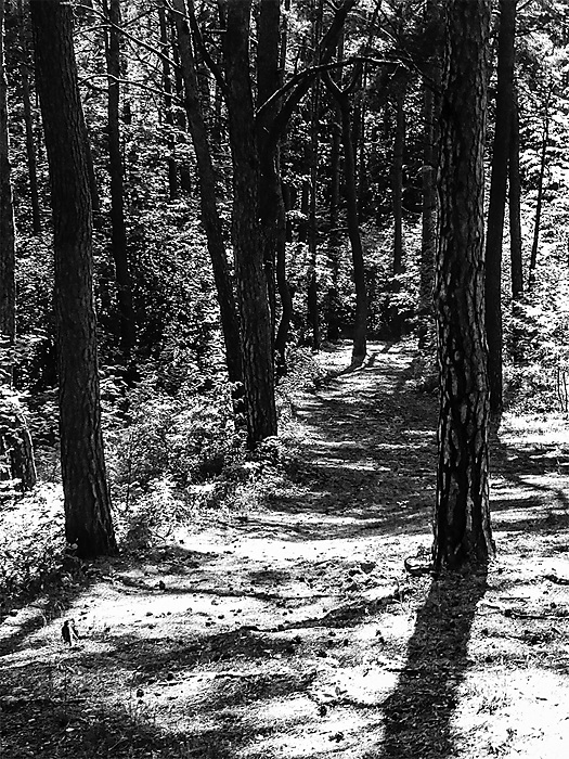 photoblog image A way through the woods