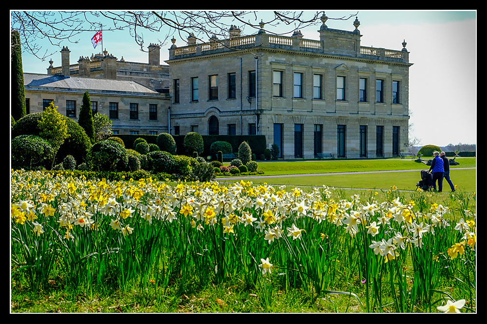 photoblog image Brodsworth Hall - House and daffodils - 1