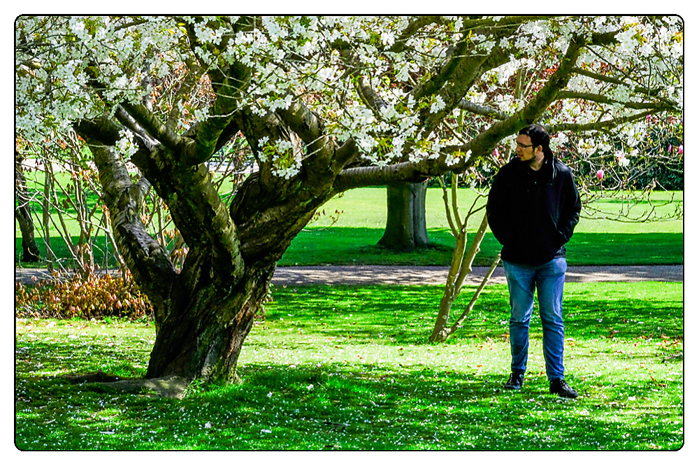 photoblog image Spring in the Gardens - Cherry blossom fan